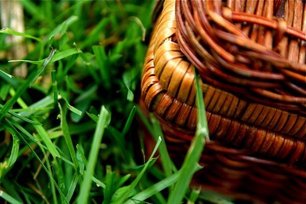 piknik wiosenny